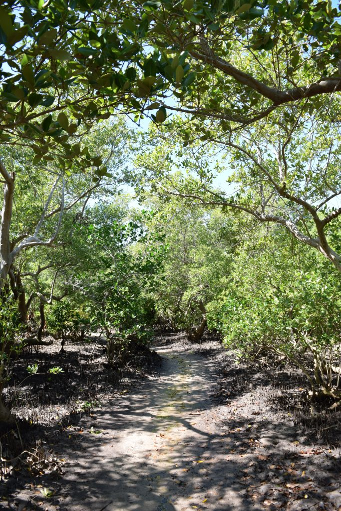 Ancient path through the mangroves.